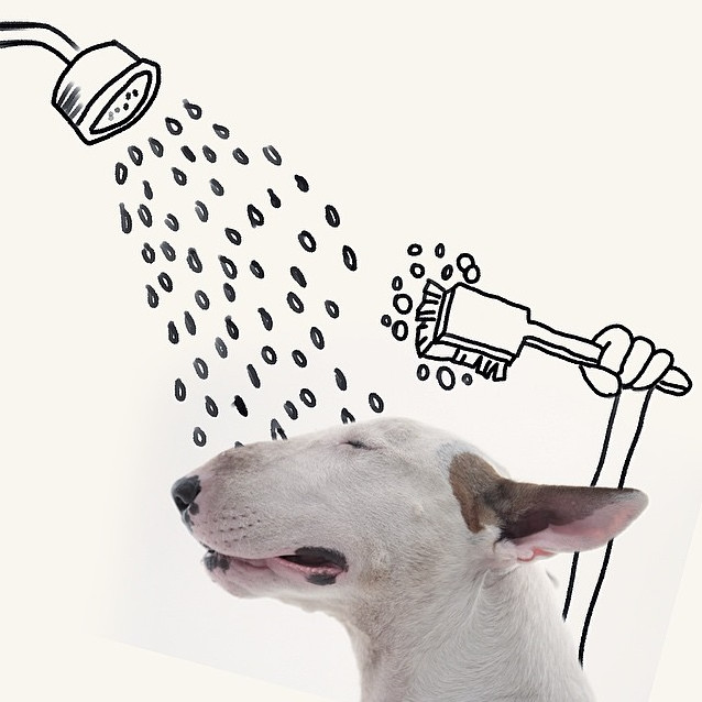 terrier in the shower
