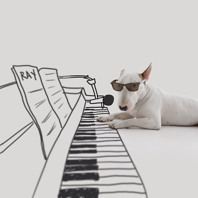 terrier playing the piano