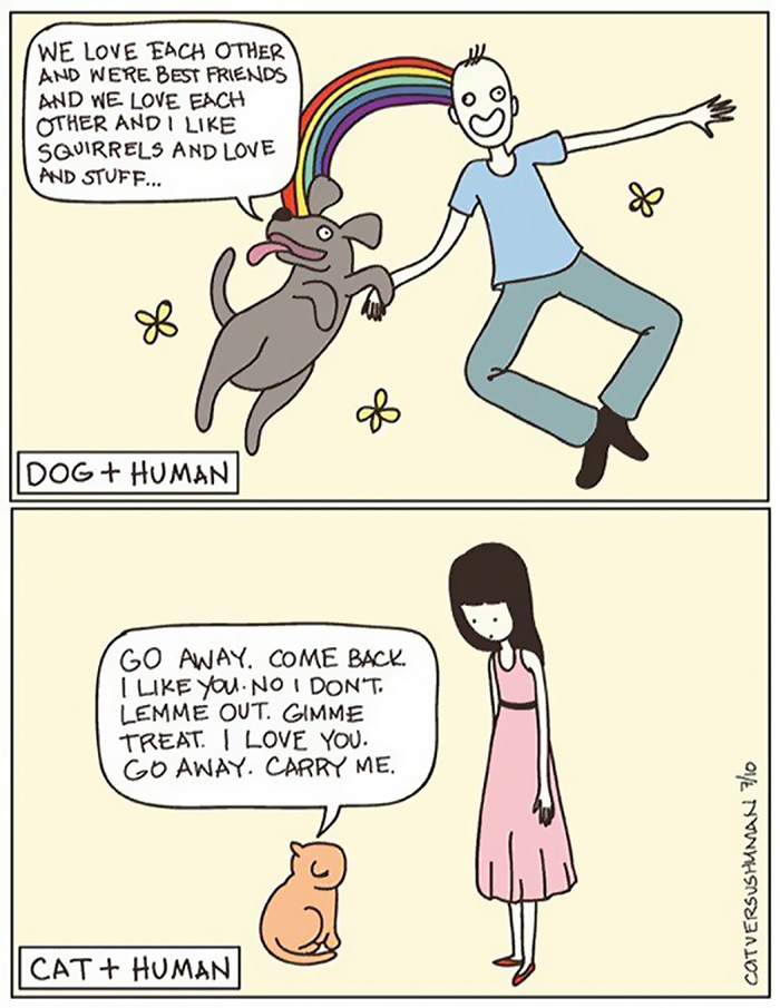 the-reality-of-owning-a-cat-cat and human