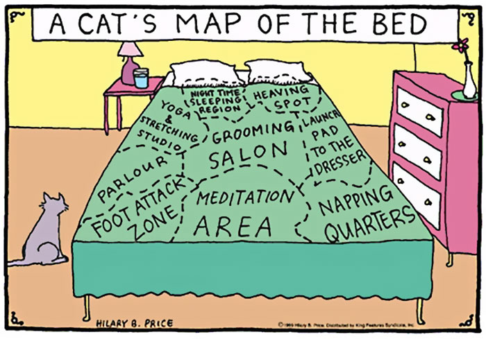 the-reality-of-owning-a-cat-map of the bed