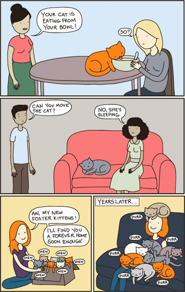 the-reality-of-owning-a-cat-purrr