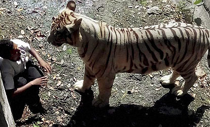 tiger_at_delhi_zoo