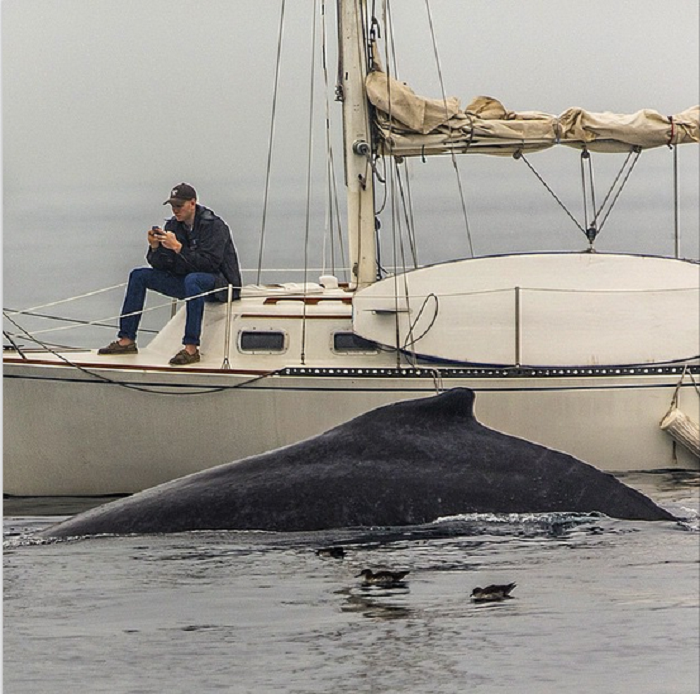 whale and the calf